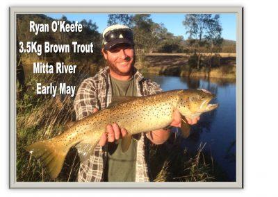 Ryan 3.5kg brown trout