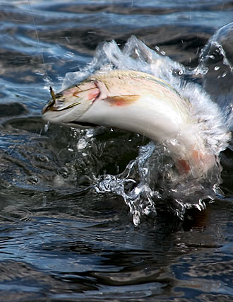 how_to_catch_trout