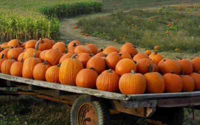 Dartmouth Autumn Harvest Festival